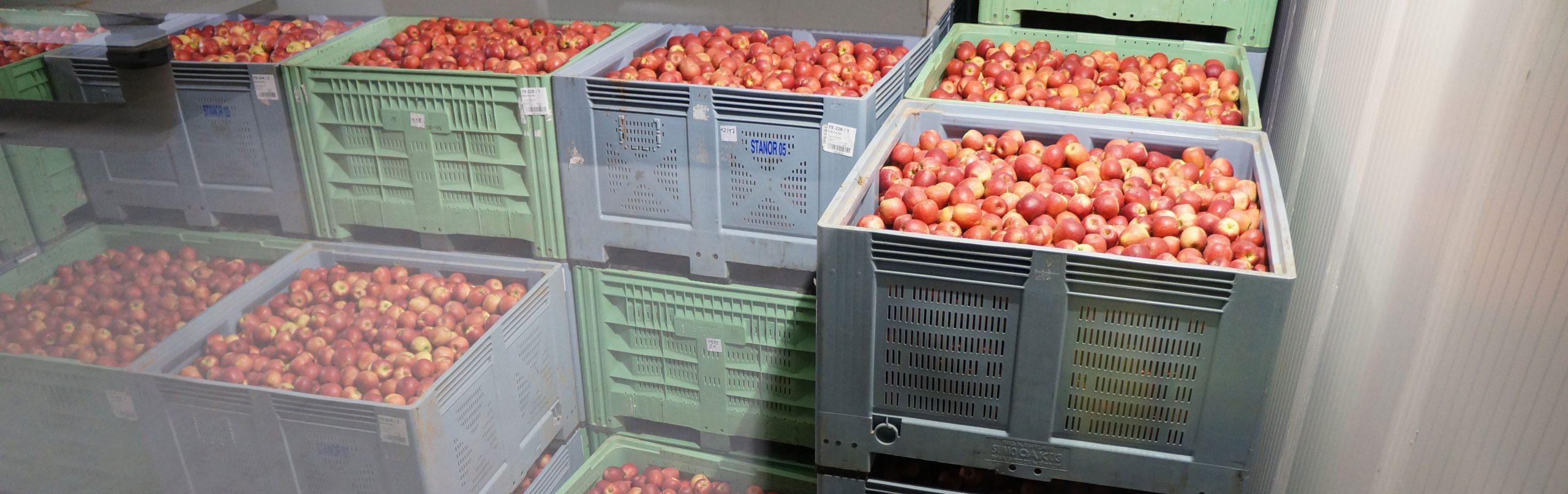 Stockage de pommes